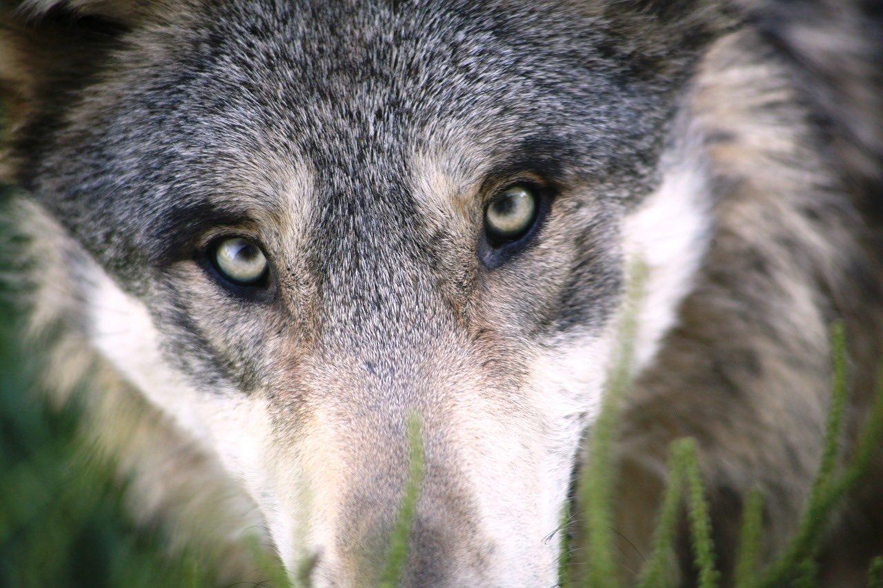 家畜化(動物行動学)の怖さについて認識しておきたい