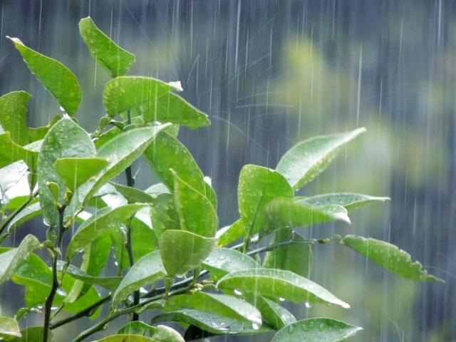 梅雨から、熱中症に対する注意が必要です!