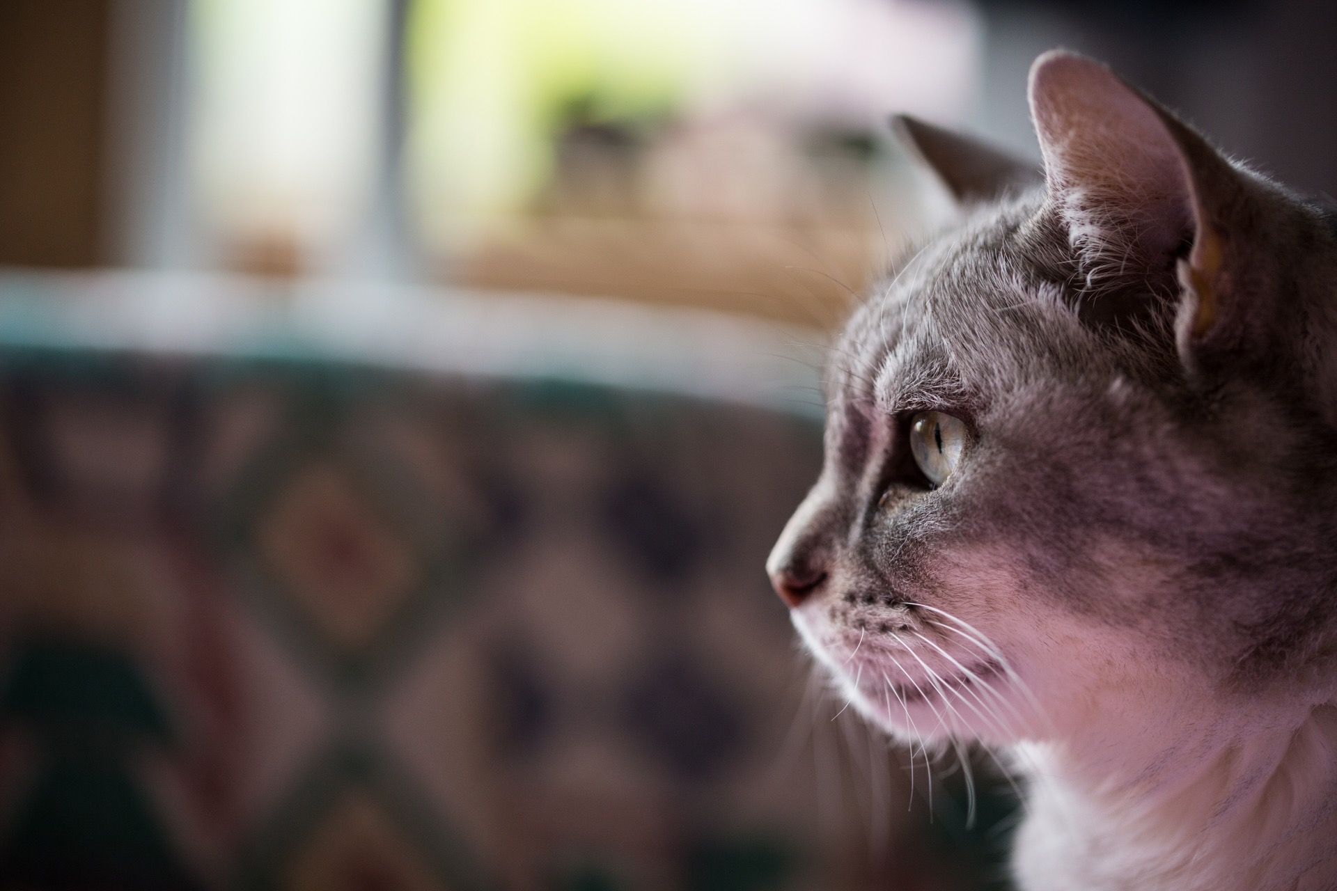 介護現場のネコ
