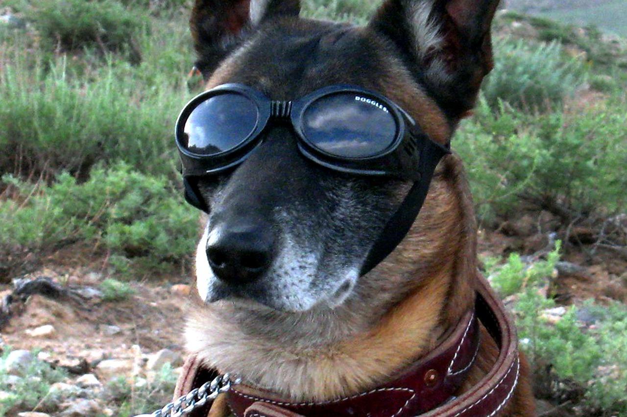 警察犬の活躍
