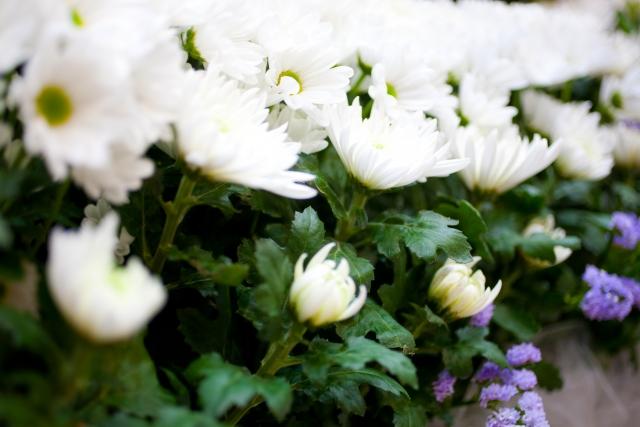 認知症の親を、その配偶者の葬儀に参列させるべきか